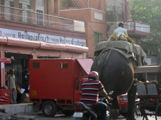 Elephant Traffic Hazard, Jaipur